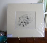 Cairn -Ca D15 - head on front paws 1930's print by Lucy Dawson